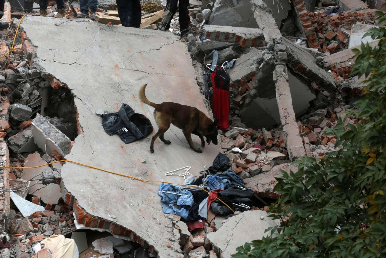 Και τα εκπαιδευμένα σκυλιά ρίχτηκαν στην μάχη της αναζήτησης επιζώντων