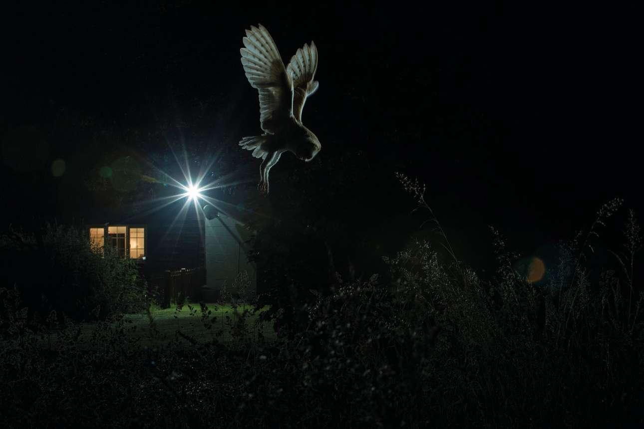 Χρυσό βραβείο, κατηγορία «Πουλιά στον κήπο». Κουκουβάγια κυνηγάει αρουραίους των αγρών. Ο τρόπος που πέφτει το φως και διαγράφεται το ζώο δίνει μια απόκοσμη αίσθηση στην φωτογραφία