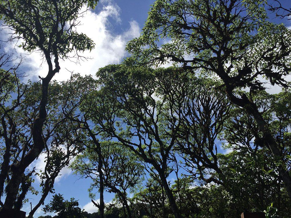 Δεύτερη θέση, κατηγορία «Βοτανική». Τα δέντρα Scalesia, γνωστά για την ικανότητα τους να προσαρμόζονται σε διαφορετικές ζώνες βλάστησης στα διάφορα νησιά των Γκαλάπαγκος