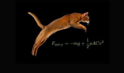Cat_jump_378806197_Protagon