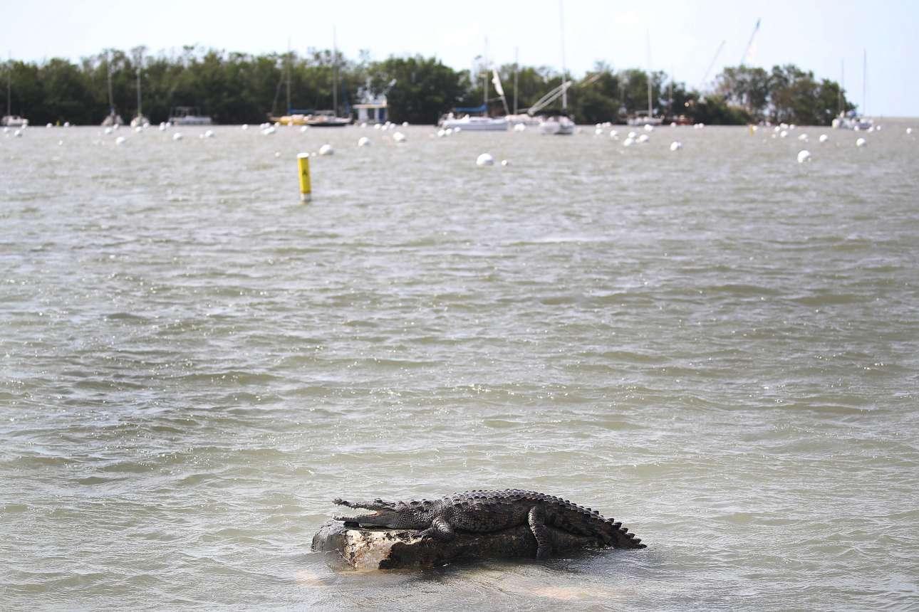 Στο πλημμυρισμένο Μαϊάμι εμφανίστηκαν ακόμα και κροκόδειλοι