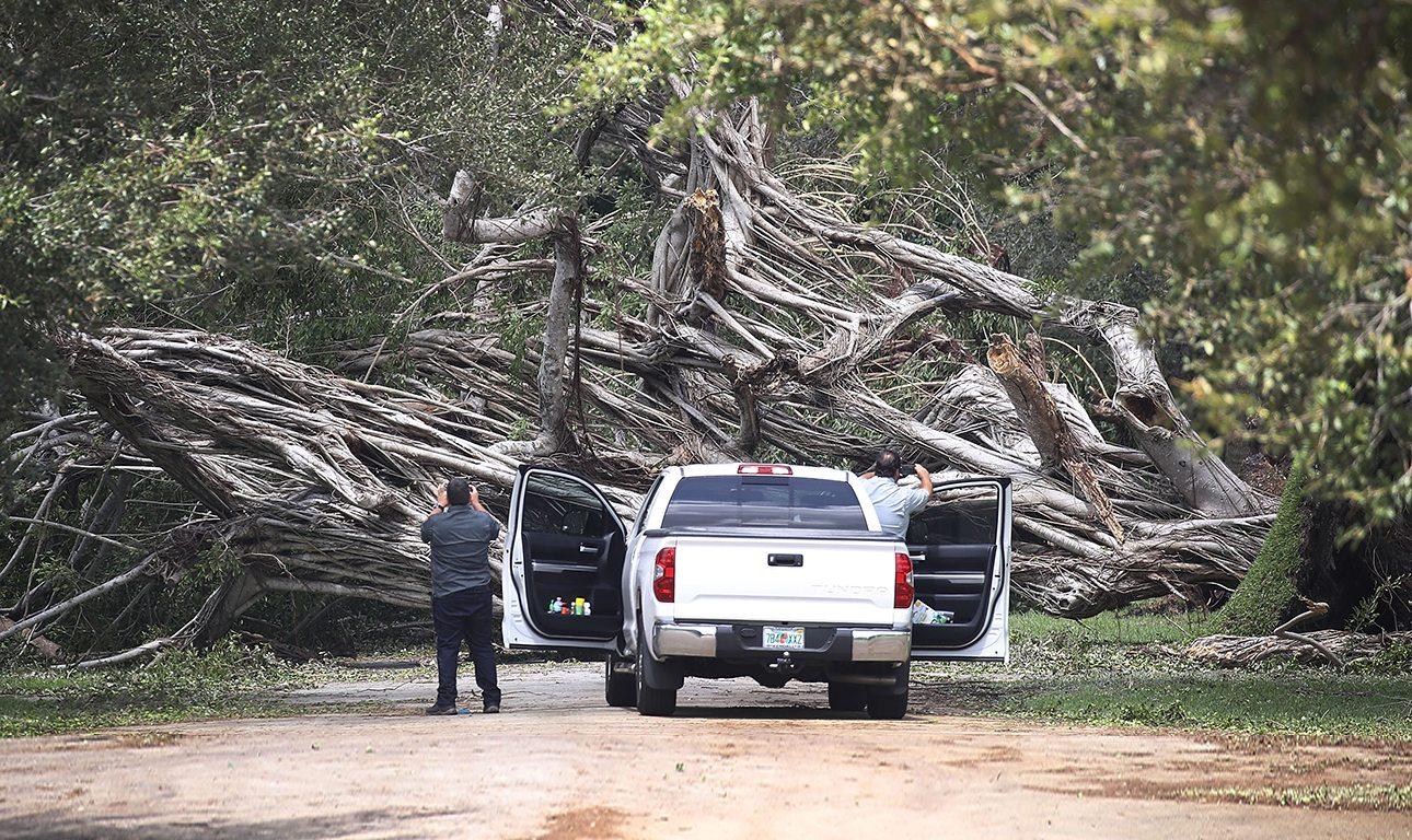 Οι πανίσχυροί άνεμοι έριξαν τεράστια δέντρα στους δρόμους του Μαϊάμι. Οι οδηγοί, το μόνο που μπορούσαν να κάνουν είναι να σταματήσουν με τα αυτοκίνητά τους και να τα φωτογραφήσουν