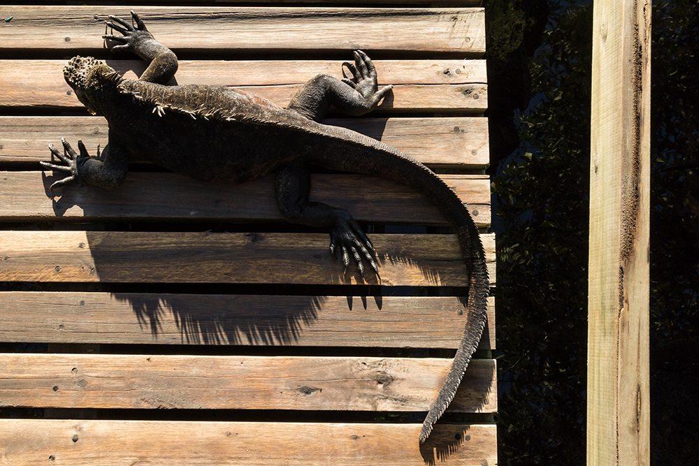 Δεύτερη θέση, κατηγορία «Ανθρωπος στο Αρχιπέλαγος». Η βραβευμένη φωτογραφία απεικονίζει εκπληκτικά την αλληλεπίδραση μεταξύ της άγριας ζωής και των ανθρώπινων κατασκευών που βρίσκονται στα Γκαλάπαγκος