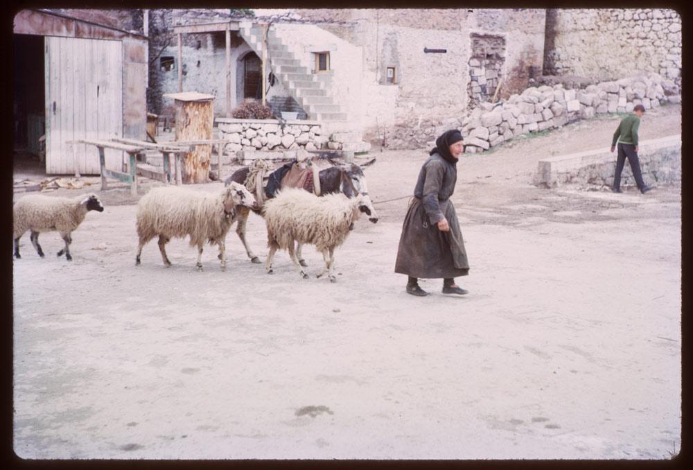 Πριν κατακλυστεί από σκιέρ και εκδρομείς, στους δρόμους της Αράχωβας κυκλοφορούσαν πρόβατα και γαϊδουράκια