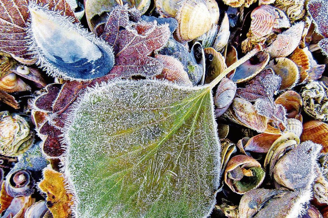Στρώμα πάγου καλύπτει τα κοχύλια και τα φύλλα της παραλίας Χάιθ, στο Χάμσαϊρ της Βρετανίας