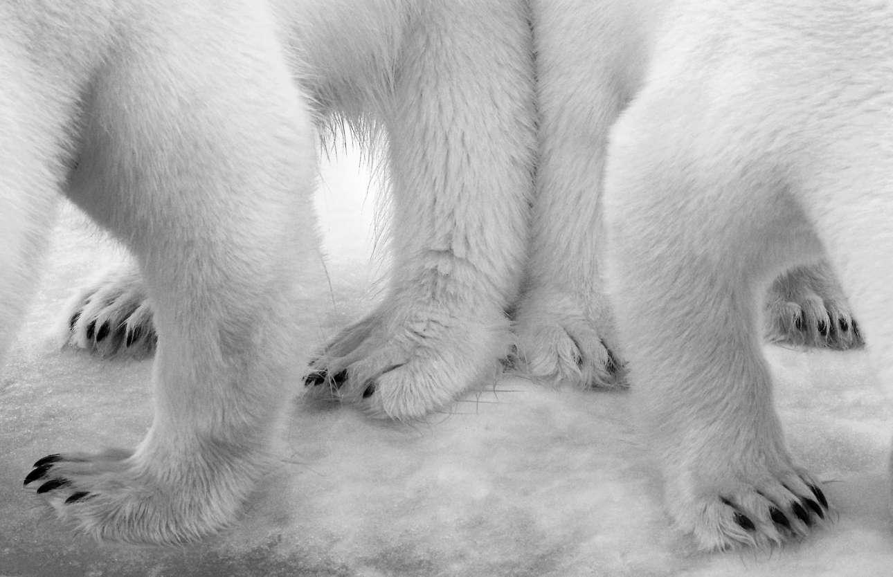 Βραβείο κατηγορία Ασπρόμαυρο. Μία πολική αρκούδα και το δίχρονο μωρό της έρχονται κοντά καθώς ένα πλοίο πλησιάζει στο αρχιπέλαγος Σβάλμπαρντ της Νορβηγίας, στην Αρκτική.