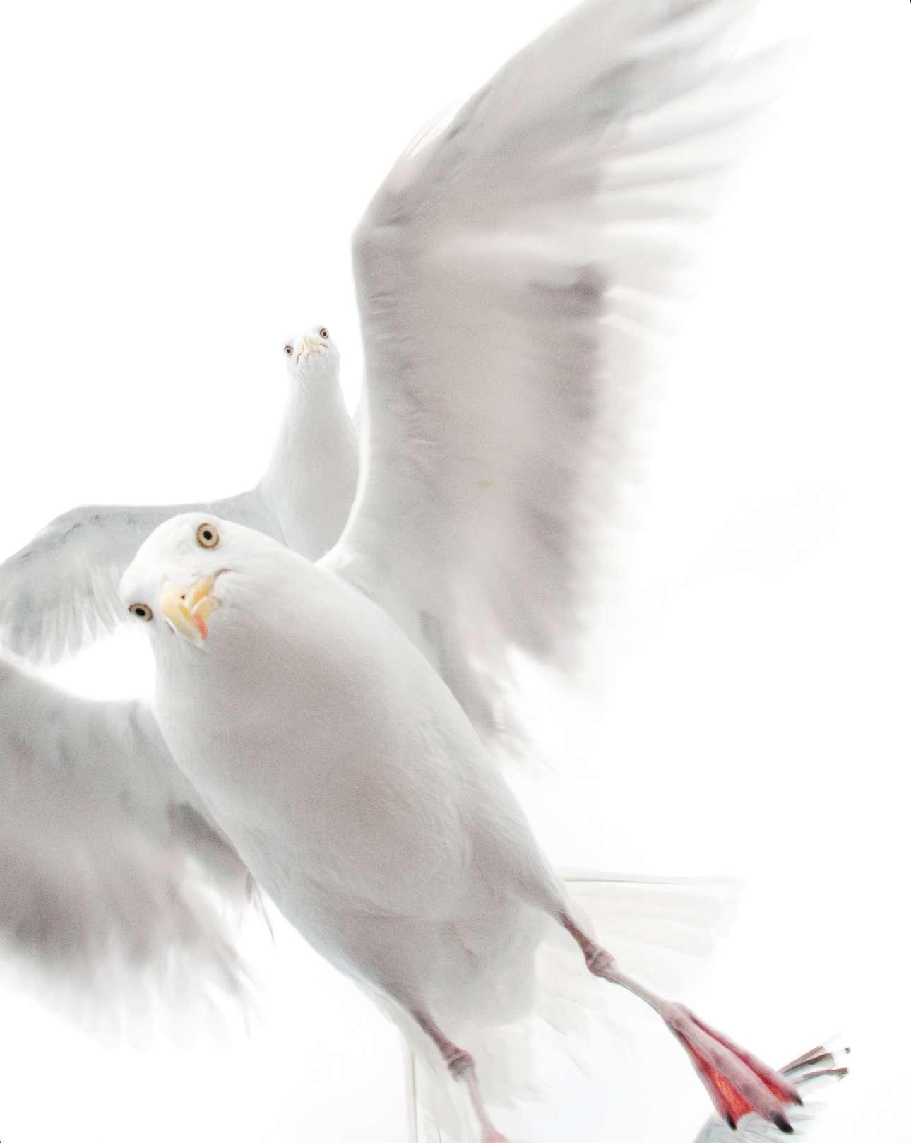 Βραβείο κατηγορία «Δέκα Ετών και Κάτω». Η μικρή Εκατερίνα λατρεύει τη φύση. Ενα κοπάδι γλάρων της τράβηξε την προσοχή, καθώς ταξίδευε με την οικογένεια της στη Νορβηγία πάνω σε πλοίο. Προσφέροντας στους γλάρους ψωμί, κατάφερε να τους κάνει να πλησιάσουν και να τους απαθανατίσει. «Μου αρέσει η έκφραση του πουλιού πίσω, μοιάζει σαν να κοιτάζει με περιέργεια τι συμβαίνει πάνω στο πλοίο» λέει η 5.5 ετών φωτογράφος