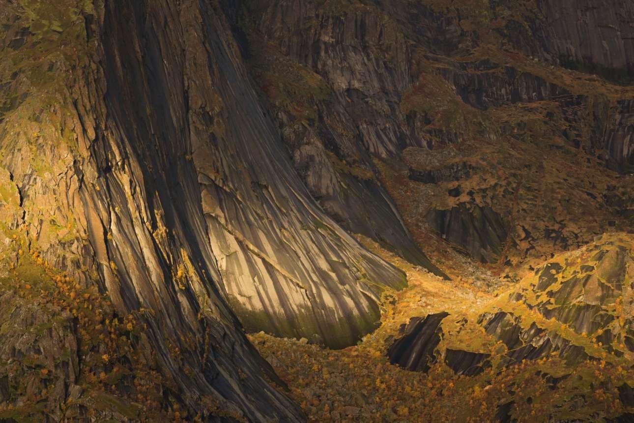 «Ταπετσαρία της Ζωής», βραβείο κατηγορία Φυτών και Μυκήτων. Ηλιος πέφτει πάνω σε ένα βράχο των νησιών Λοφότεν στη Νορβηγία, φωτίζοντας τον χλοοτάπητα που καλύπτει το φαράγγι και τις πλαγιές του. Κάτω από το φθινοπωρινό φως, ο βράχος μοιάζει χρυσός