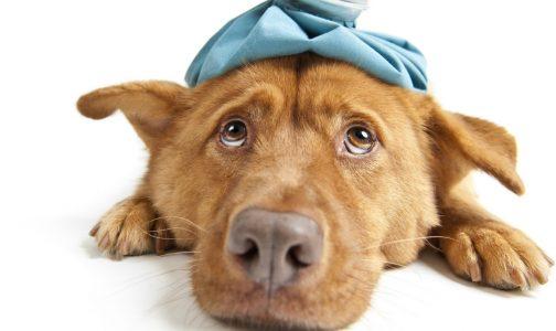 DOG-sick-1290