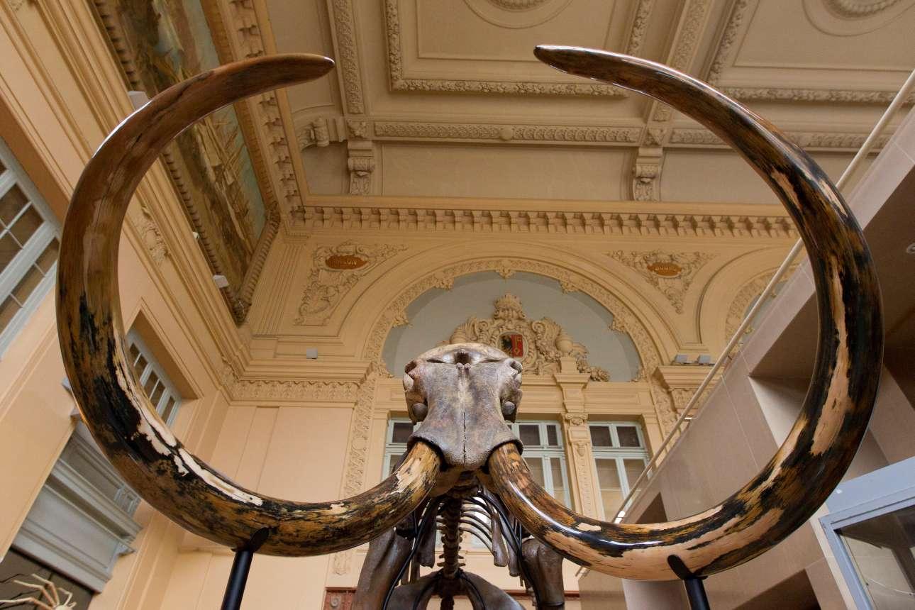 Παρασκευή, 17 Νοεμβρίου, Λυών. Πόσο κοστίζει ένα μαμούθ; Ενας ολόκληρος σκελετός των προϊστορικού μαστόδοντου εκτίθεται για να δημοπρατηθεί