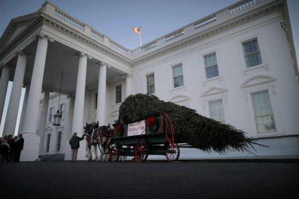 Μεταφορά του δέντρου με τον παραδοσιακό τρόπο (REUTERS/Carlos Barria)