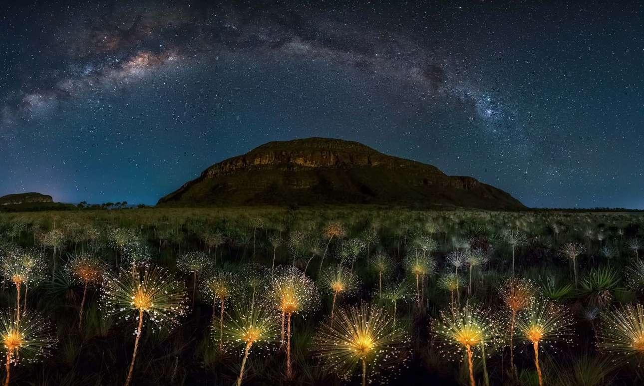 Ενα χωράφι από εντυπωσιακά λουλούδια Paepalanthus stellatus κάτω από το φως του φεγγαριού, στο Εθνικό Πάρκο Veadeiros Tablelands της Βραζιλίας