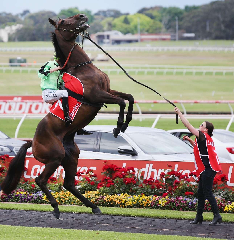 Σάββατο, 18 Νοεμβρίου, Μελβούρνη. Ενα εντυπωσιακό καφέ άλογο σηκώνεται στα δύο του πόδια λίγο πριν την έναρξη ιπποδρομιακού αγώνα στο στάδιο Σπρίνγκβεϊλ στην Αυστραλία