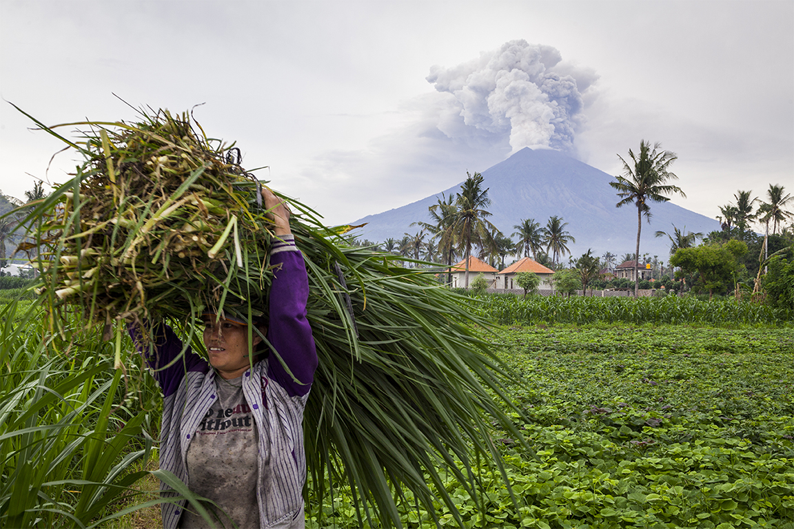 KARANGASEM, BALI, INDONESIA - NOVEMBER 28: A farmer is seen carrying grass while Mount Agung spews heavy volcanic ash on November 28, 2017 in Karangasem, Island of Bali, Indonesia. Indonesian authorities raised the state of alert to its highest level for the volcano, Mount Agung, after thick ash started shooting thousands of meters into the air with increasing intensity. Based on reports, as many as 100,000 villagers will need to leave the expanded danger zone while tens of thousands of tourists have been stranded due to airport closures. (Photo by Andri Tambunan/Getty Images)