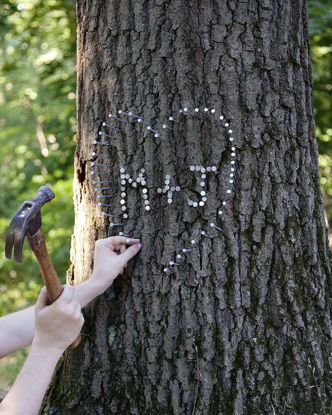 Στο Μέριλαντ αν χτυπήσει κάποιος καρφί με σφυρί σε δέντρο, θα τιμωρηθεί με πρόστιμο 50 δολαρίων