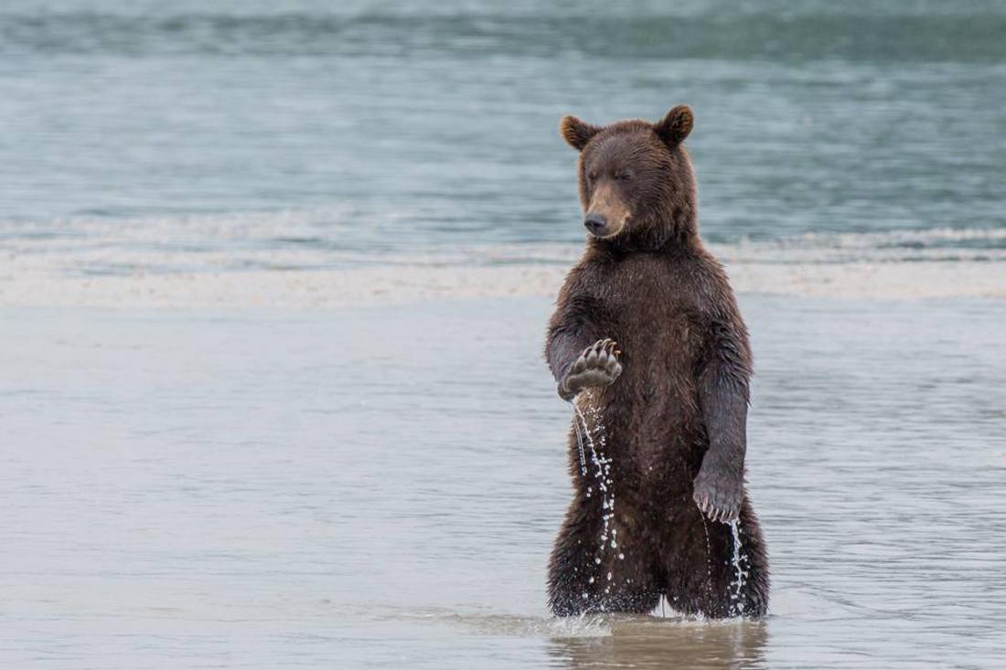 Σαν «ώπα, ηρέμησε» θα μπορούσε να ερμηνευτεί η αστεία χειρονομία της εικονιζόμενης αρκούδας