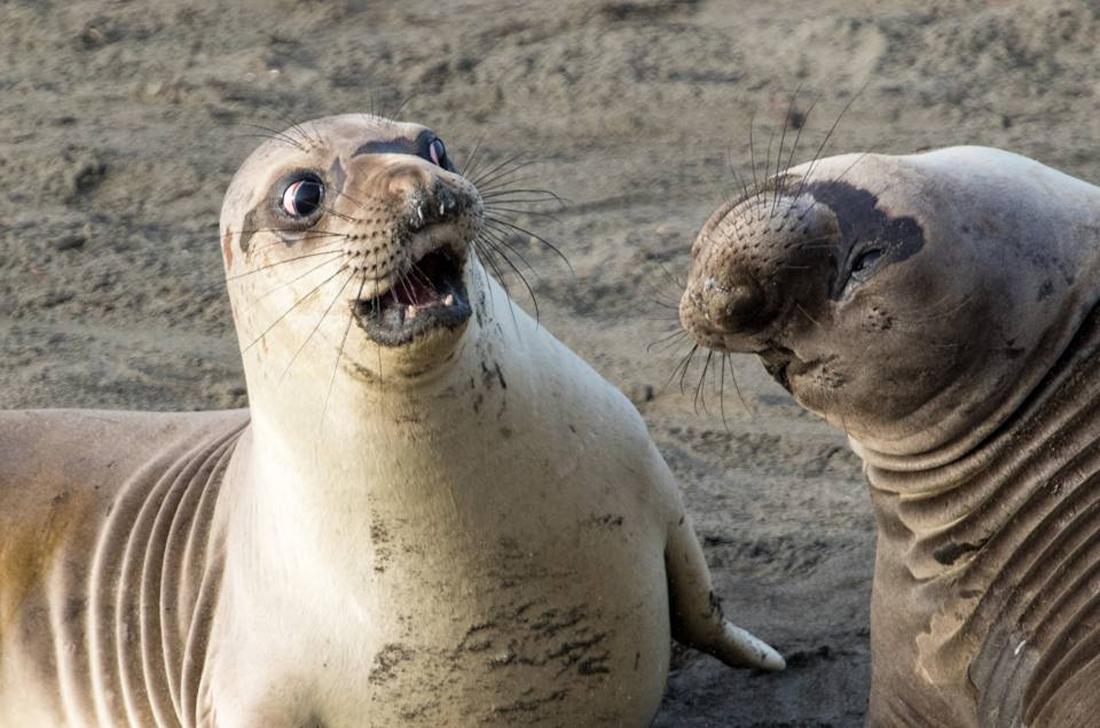 Με σοκ και τρόμο κοιτάζει ένα θαλάσσιο λιοντάρι τον φίλο του, στην Καλιφόρνια