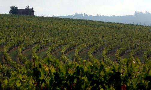 REUTERS-Stefano Rellandini-vineyard-Tuscan-1290