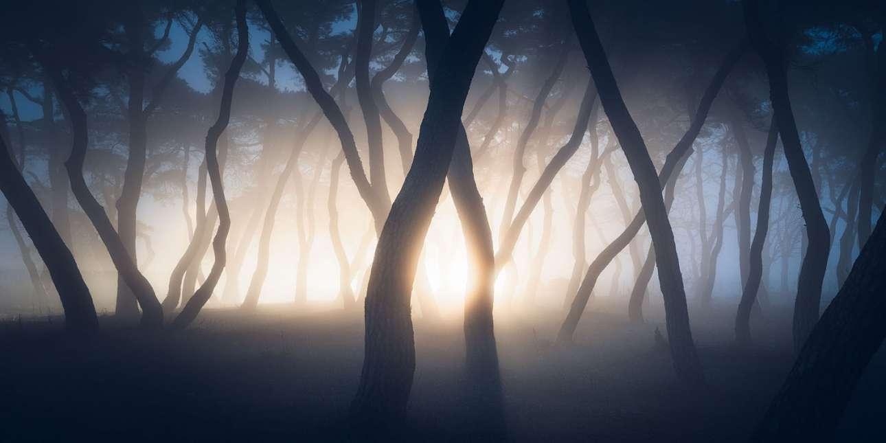 «Stranger Things». Προβολείς αυτοκινήτου φωτίζουν το ομιχλώδες πευκοδάσος στο Boeun της Νότιας Κορέας, λίγο πριν από την ανατολή. Ο τίτλος δανεισμένος από την ομώνυμη σειρά του Netflix, μεταφέρει τέλεια την απόκοσμη ατμόσφαιρα