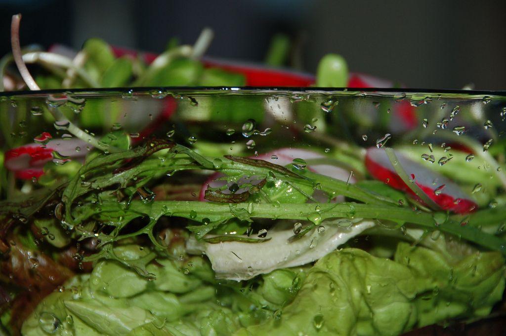 salad-S0MEBODY 3LSE-Flickr