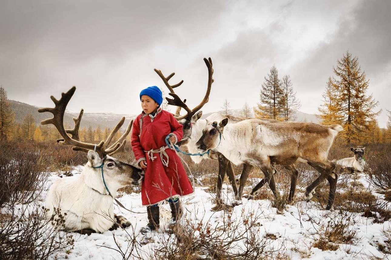 «Το παιδί και οι τάρανδοι». Ενα μικρό αγόρι Τσατάν προσέχει τους ταράνδους πριν έρθει η κρύα νύχτα. Η επιβίωση της νομαδικής φυλής της Μογγολίας είναι απολύτως συνυφασμένη με την εκτροφή ταράνδων