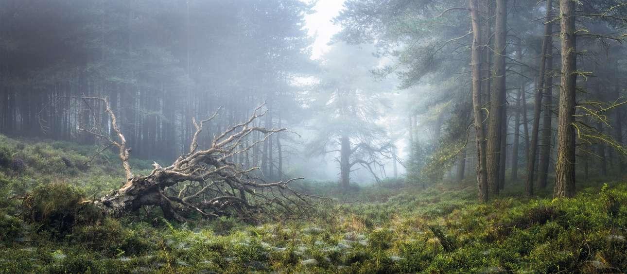 «Φως στη Γη». «Υπέροχες και σπάνιες συνθήκες στο Βόρειο Γιόρκσαϊρ που δεν γινόταν να μην αποτυπώσω: πυκνή ομίχλη και μια ιδέα ζεστού φωτός καθώς ο πρωινός ήλιος προσπαθεί να βγει» γράφει ο φωτογράφος στη συνοδευτική λεζάντα