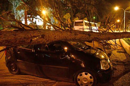 Θυελλώδεις άνεμοι που έπνεαν στο Ναύπλιο είχαν σαν  αποτέλεσμα να καταπλακωθούν από πτώσεις δέντρων αυτοκίνητα μέσα στην πόλη, Πέμπτη 18 Ιανουαρίου 2018. Στην οδό Κύπρου στο κέντρο του Ναυπλίου τρία αυτοκίνητα καταπλακώθηκαν από μεγάλα πεύκα που έπεσαν από τους πολύ δυνατούς ανέμους Δέντρα έπεσαν στην παραλιακή στον δρόμο προς Κιβέρι, ενώ πολλές τέντες έχουν καταστραφεί από καταστήματα και διαμερίσματα.  ΑΠΕ-ΜΠΕ /ΑΠΕ-ΜΠΕ/ΜΠΟΥΓΙΩΤΗΣ ΕΥΑΓΓΕΛΟΣ