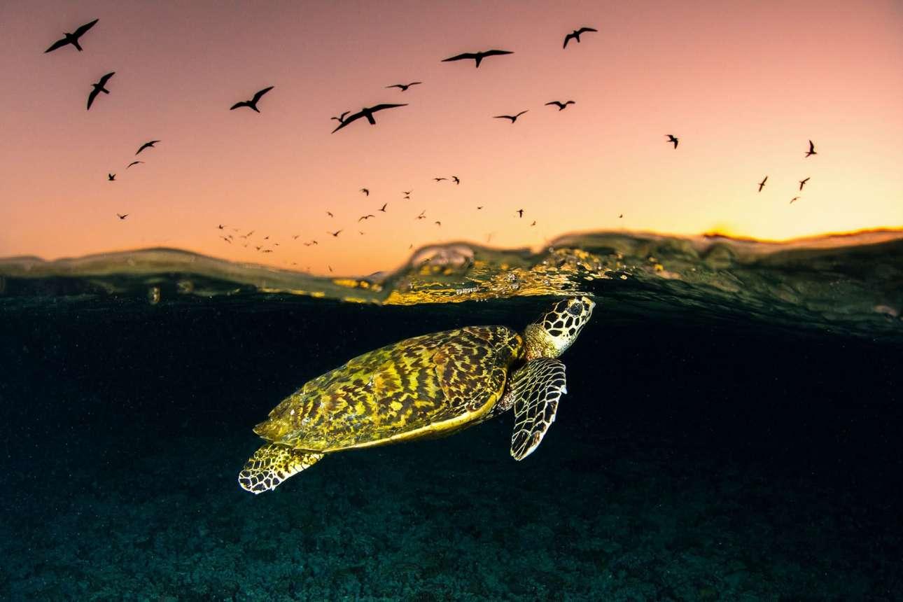 «Φωτογράφος Ζώων και Αγριας Φύσης της Χρονιάς».  Ο 24χρονος Τζόρνταν Ρόμπινς κέρδισε επίσης το πρώτο βραβείο του διαγωνισμού για τη φωτογραφική σειρά του με θέμα τον Μεγάλο Κοραλλιογενή Υφαλο, στη βορειοανατολική Αυστραλία