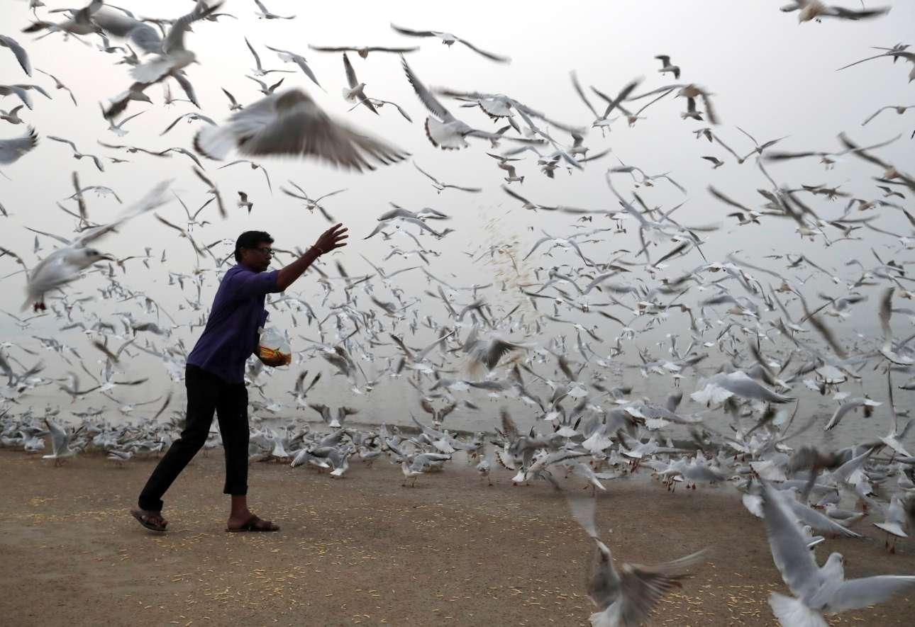 Τρίτη, 9 Ιανουαρίου, Ινδία. Ταΐζοντας τους γλάρους σε παραλία της Μουμπάι (Βομβάης)