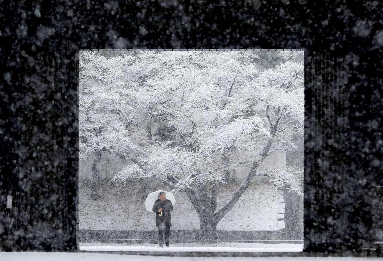 Δευτέρα, 22 Ιανουαρίου, Ιαπωνία. Περπατώντας στο Τόκιο στη διάρκεια σφοδρής χιονόπτωσης