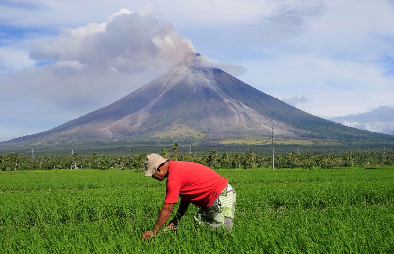Πέμπτη, 25 Ιανουαρίου, Φιλιππίνες. Αγρότης εργάζεται σε μία φάρμα την ώρα που πίσω του, το ηφαίστειο του Μαγιόν βρυχάται και βγάζει καπνούς