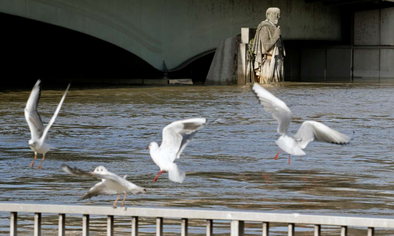 Οι γλάροι δείχνουν να απολαμβάνουν την άνοδο της στάθμης του Σηκουάνα, που έφερε πολλά ψάρια. Ο Ζουάβ παρακολουθεί μάλλον ταραγμένος