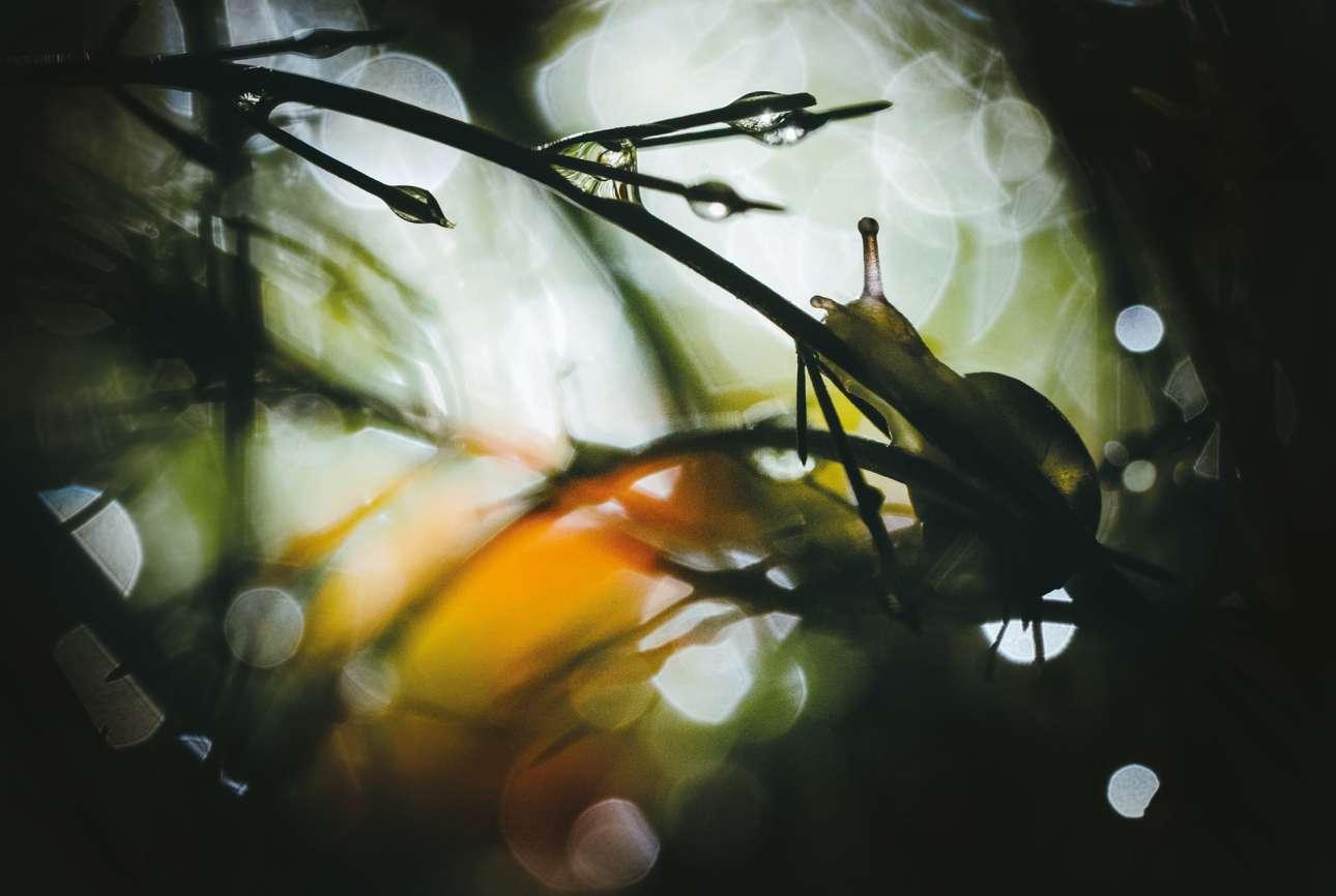 «Μικρός Κόσμος». «Το φυτό σπαράγγι στον κήπο μου προσφέρει καταφύγιο στην άγρια Φύση. Συνήθως ψάχνω για αράχνες μέσα σε αυτό για να φωτογραφίσω, αλλά εκείνο το απόγευμα μετά από έντονη βροχή, είχε καταληφθεί από σαλιγκάρια. Το φως πίσω προέρχεται από έναν φωτισμένο καρπό του φυτού. Πάντα προσπαθώ να επισκέφτομαι το φυτό μετά από βροχή, καθώς οι φωτισμένες σταγόνες ζωντανεύουν την εικόνα» γράφει ο βρετανός φωτογράφος από το Εσεξ