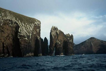 antipodes-islands-tui-de-roy-department-of-conservation