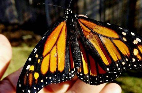 butterflyhealer