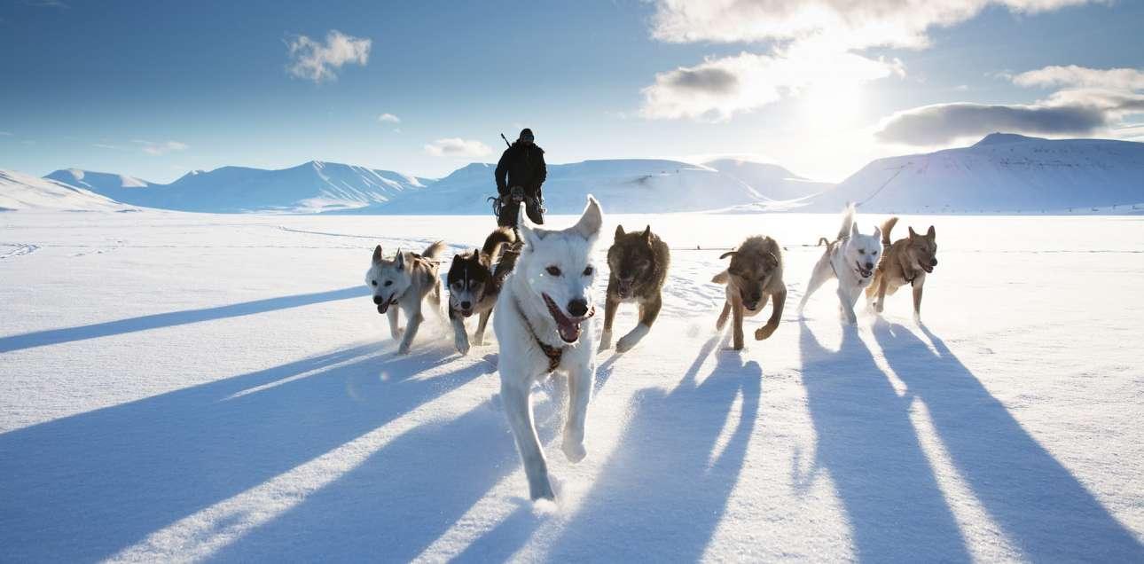 Βραβείο κατηγορία Δράση. Ελκηθρο με σκυλιά στο Σβάλμπαρντ της Νορβηγίας. «Μία επική εικόνα που σε βουτάει μέσα στην εμπειρία» γράφουν οι κριτές