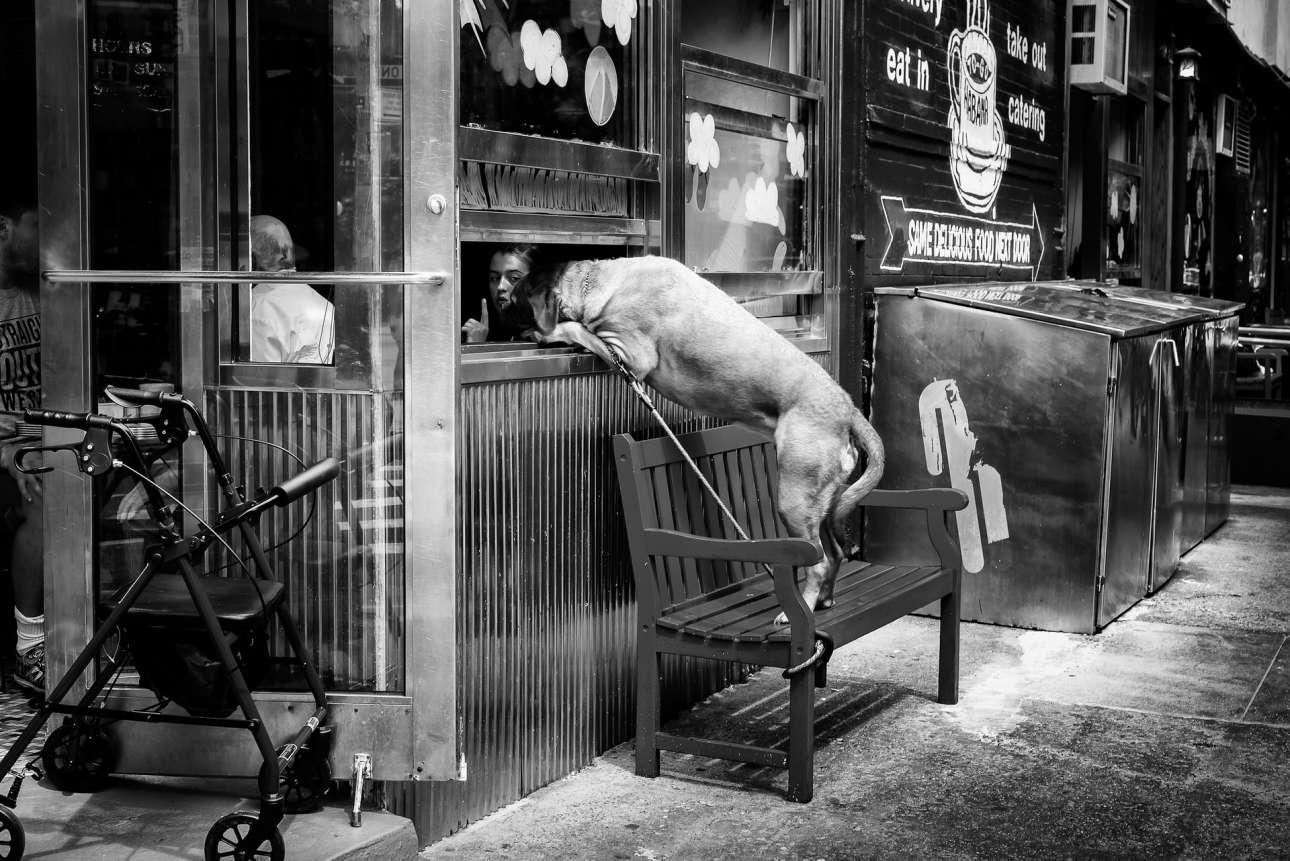 Βραβείο κατηγορία Αστικό Τοπίο. Ενας τεράστιος σκύλος προσπαθεί να κλέψει το φαγητό από πελάτη εστιατορίου, στο Μανχάταν της Νέας Υόρκης. «Τέλειο τάιμινγκ, ρεαλιστική, ασπρόμαυρη και κωμική, η λήψη του Τζον Γουάιτ έχει όλα τα χαρακτηριστικά του κλασικού ρεπορτάζ, στο στιλ του Ανρί Καρτιέ Μπρεσόν και του Ρομπέρ Ντουανό» γράφουν οι κριτές