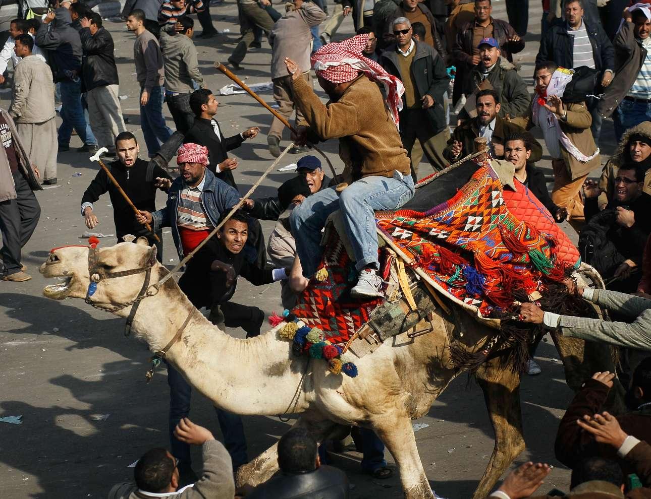 Ενας υποστηρικτής του προέδρου της Αιγύπτου Χόσνι Μουμπάρακ καβαλά μία καμήλα εν μέσω συμπλοκών στην πλατεία Ταχρίρ στις 2 Φεβρουαρίου του 2011 στο Κάιρο. Την προηγούμενη ημέρα, ο πρόεδρος Μουμπάρακ είχε ανακοινώσει ότι δεν θα έθετε ξανά υποψηφιότητα στις προεδρικές εκλογές. Οι διαδηλωτές όμως είχαν απορρίψει την πρότασή του να παραμείνει ο ίδιος στην εξουσία μέχρι τις επόμενες εκλογές και απαίτησαν την εκδίωξή του. Ετσι, ξέσπασαν σοβαρά επεισόδια που οδήγησαν τον Μουμπάρακ να παραδώσει την εξουσία