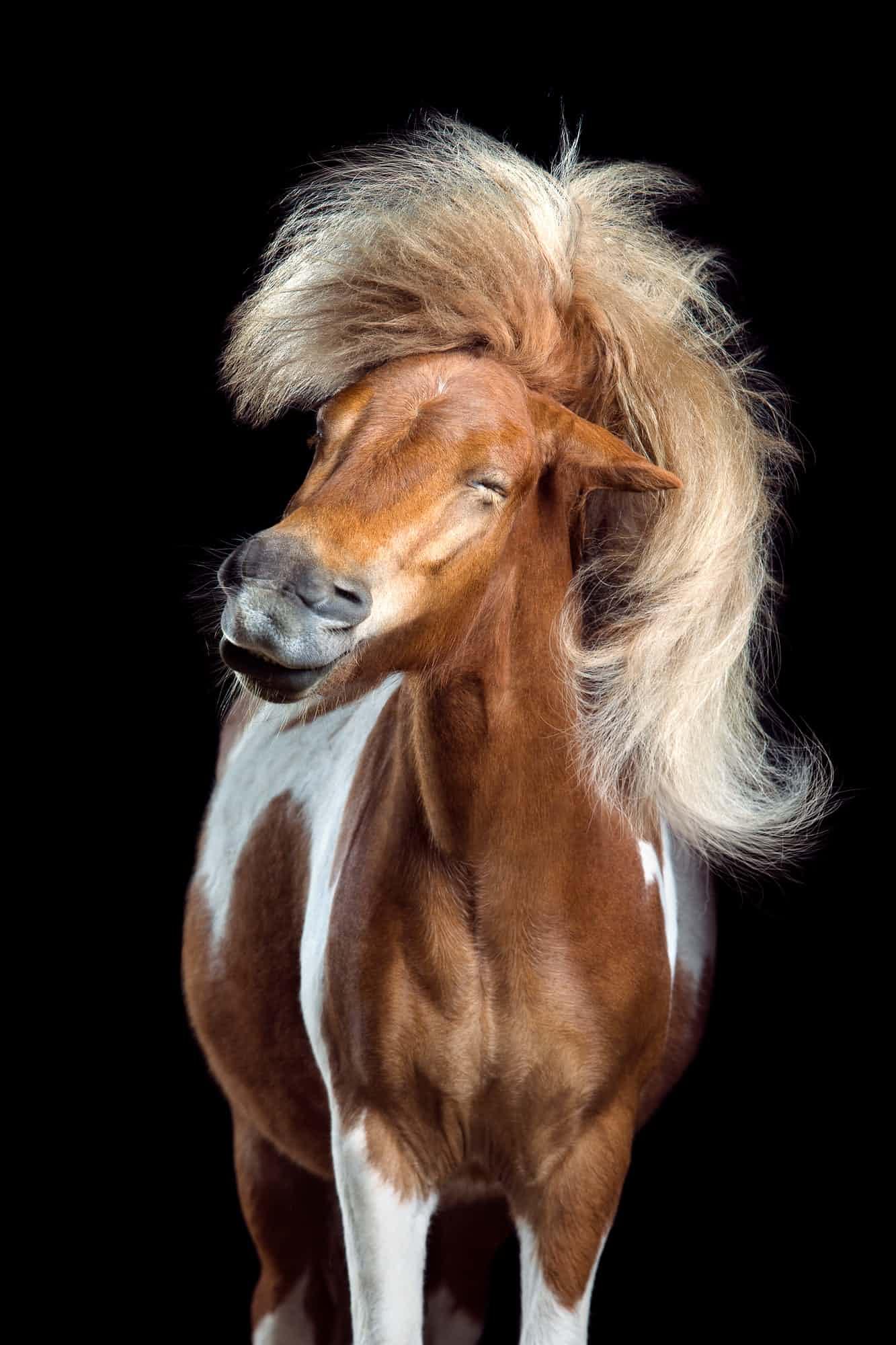 «Η τέλεια περούκα». Τρίτη θέση, κατηγορία Φυσικός Κόσμος και Αγρια Φύση. Μετά από λίγο γαργαλητό στο αυτί το άλογο τινάζει το κεφάλι του, κάνοντας την πλούσια χαίτη του να μοιάζει με περουκίνι. «Φωτογραφίζω άλογα επειδή λατρεύω την ομορφιά τους και την υπέροχη χάρη τους και επειδή μπορούν να γίνουν φοβερά αστεία» λέει ο γερμανός φωτογράφος