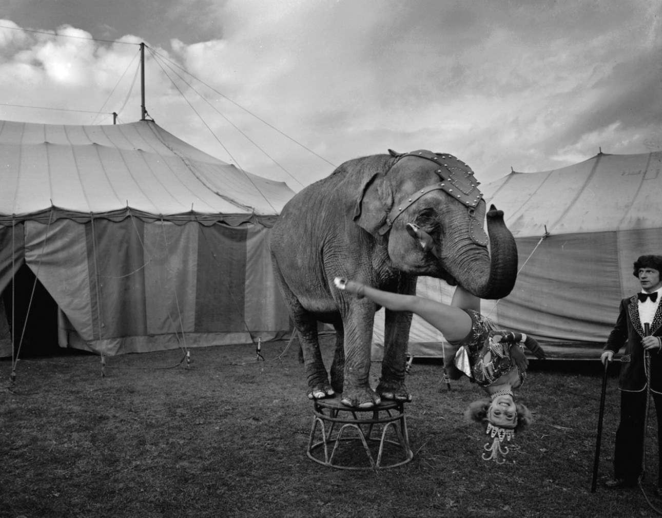 Η Μπρέντα Χαένι κάνει ακροβατικά συνεργαζόμενη με νεαρό ελέφαντα, στo τσίρκο των Αδελφών Φοσέτ, το 1973