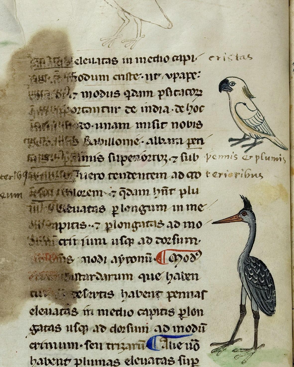 manuscript-1