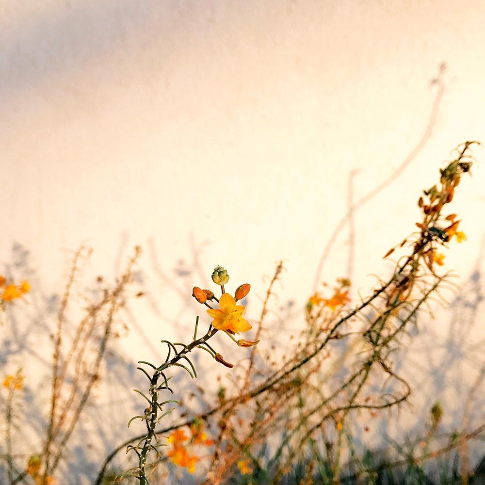 Πρώτη θέση στην κατηγορία Λουλούδια. «Καθώς πήγαινα να κάνω τα εβδομαδιαία μου ψώνια, συνάντησα αυτό το εκπληκτικό φως που έπεφτε πάνω στον τοίχο και στα λουλούδια»