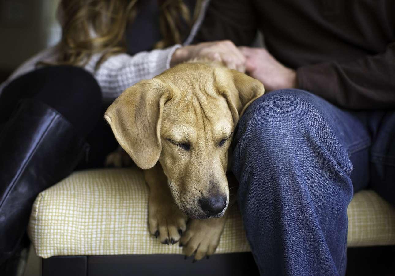 Πρώτη θέση στην κατηγορία «Σκύλοι διάσωσης και από Φιλοζωική». Το αγαπημένο ζευγάρι της φωτογραφίας μόλις έχει υιοθετήσει το πρώτο του παιδί... το πανέμορφο λαμπραντόρ Κούπερ