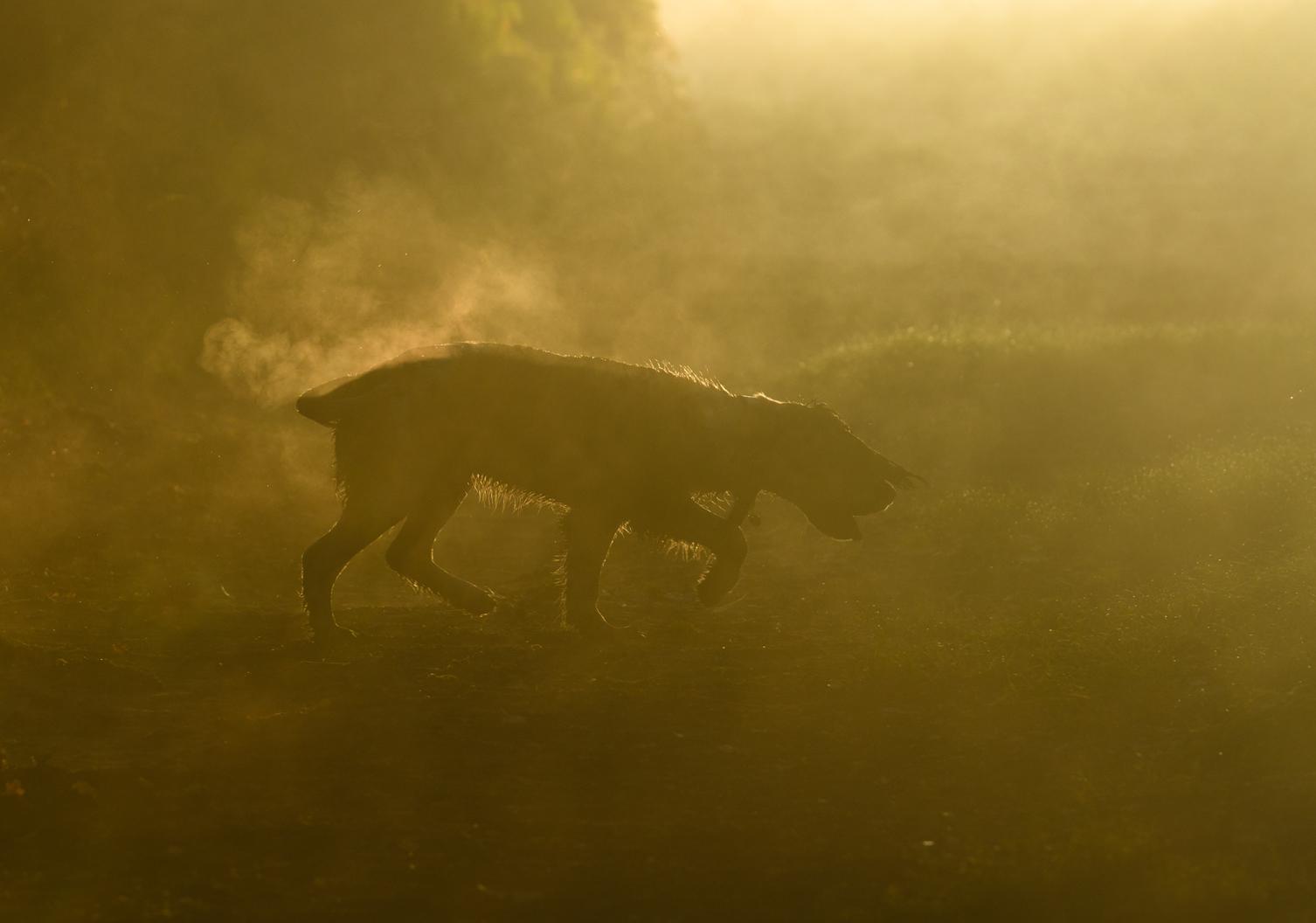 Δεύτερη θέση στην κατηγορία «Σκύλοι εν ώρα εργασίας». Μέσα στην ομίχλη, το αγγλικό σπρίνγκερ σπάνιελ Τάρλι μυρίζει και ψάχνει κάτι στη βρετανική εξοχή