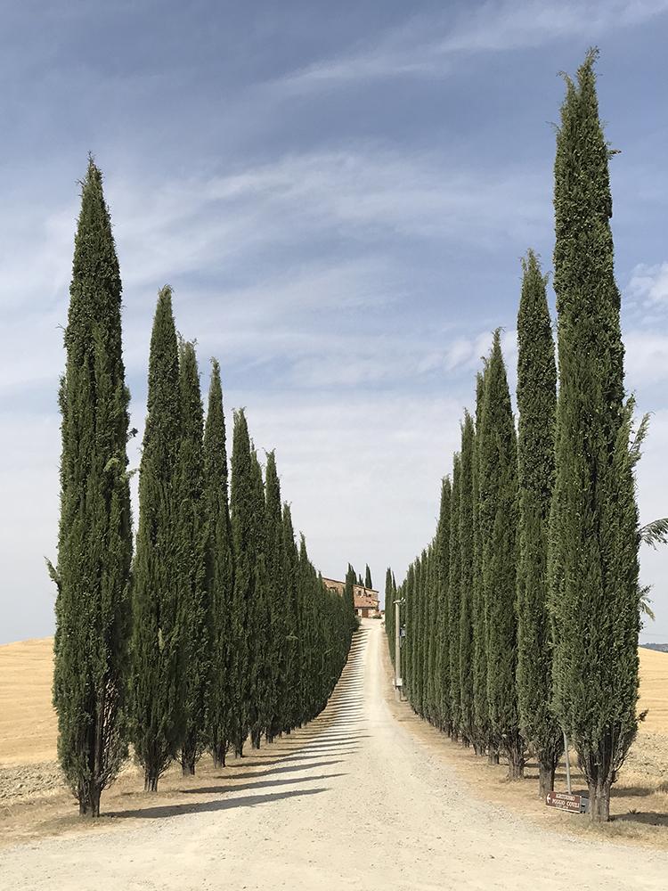 Πρώτη θέση στην κατηγορία Δέντρα. Μέσα στο ειδυλλιακό τοπίο της Τοσκάνης, ένας δρόμος από κυπαρίσσια οδηγεί σε ιταλική κατοικία, κοντά στο Μονταλτσίνο και τη Πιέντζα