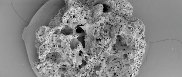 Εικόνα σε μεγέθυνση ενός μικρού υπολείμματος του ψωμιού η ηλικία του οποίου υπολογίστηκε στα 14,5 χιλιάδες έτη. φωτό: Lara Gonzales Carratero)