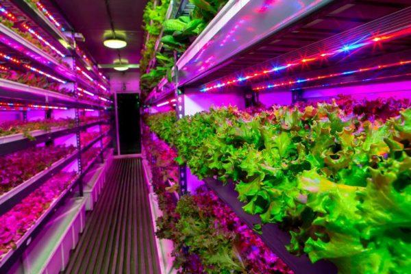 Η Crop One έχει εμπλακεί και σε άλλες κάθετες φάρμες όπως η εικονιζόμενη που βρίσκεται στην Μασαχουσέτη. (Crop One Holdings)