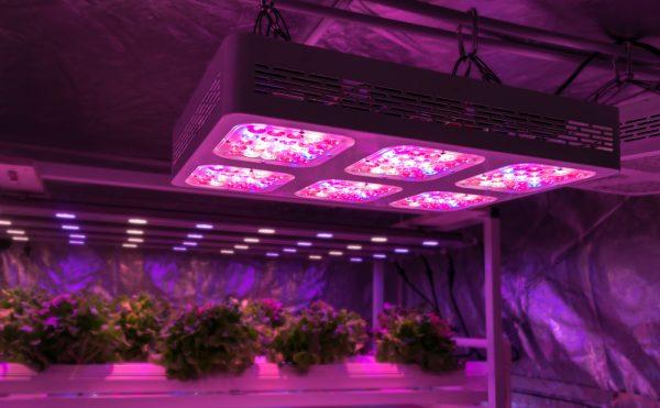 Οι λάμπες LED παίζουν τον ρόλο του... Ηλιου στις καλλιέργειες εσωτερικού χώρου (Shutterstock)