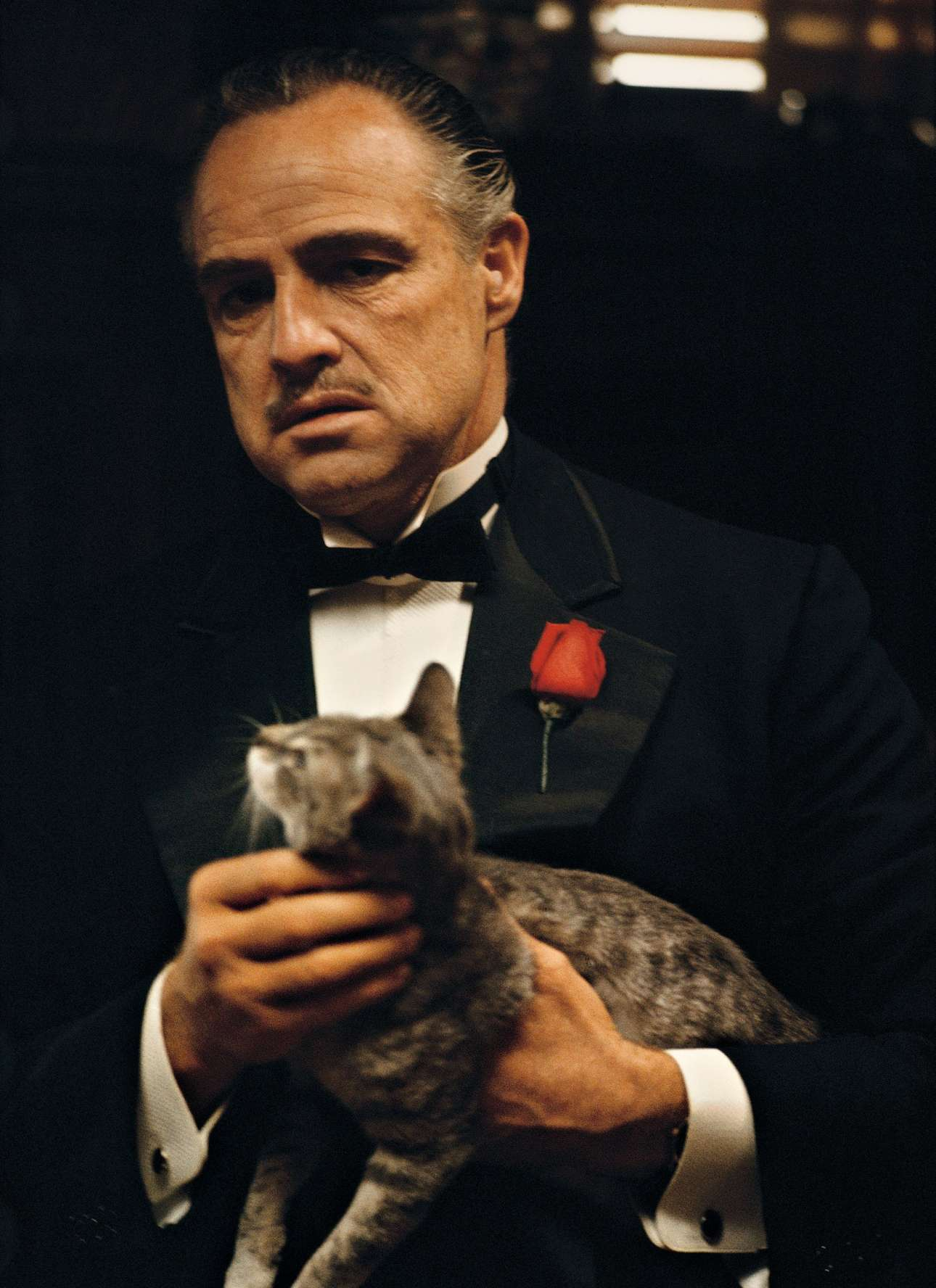 O Μάρλον Μπράντο στην εναρκτήρια σκηνή του «Νονού» (1972) του Φρανσις-Φορντ Κόπολα. Η γάτα ήταν μια αδέσποτη που είχε βρει ο σκηνοθέτης να τριγυρνά στα στούντιο της Paramount. Δεν υπήρχε στο σενάριο, αλλά θεωρήθηκε -και πολύ σωστά- ότι θα προσέθετε κάτι στον χαρακτήρα του Ντον Κορλεόνε