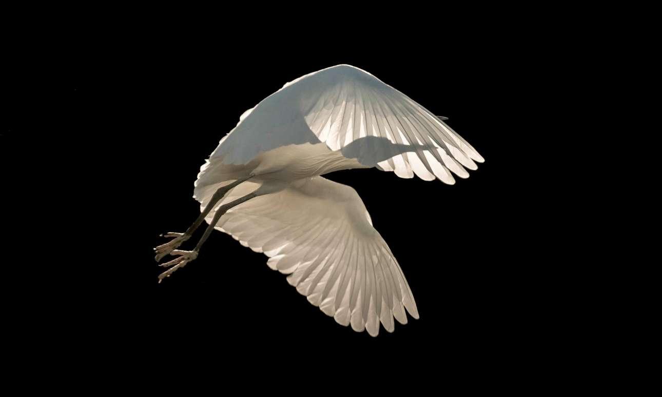 Βραβείο στην κατηγορία «Πουλιά εν πτήσει» και βραβείο Κοινού. «Ελευθερία» ο τίτλος της φωτογραφίας που αποτυπώνει ένα λευκό ερωδιό να πετάει